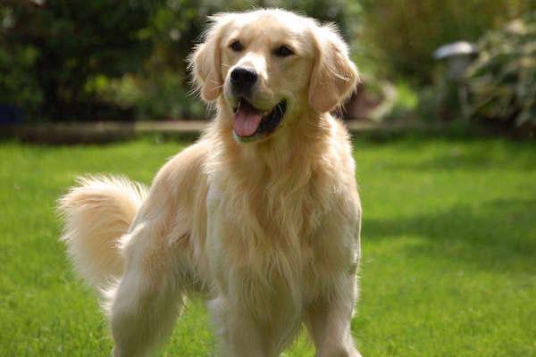 dog_anyone_smooth_start